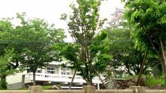 早稲田大学系属早稲田佐賀高等学校