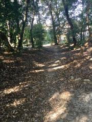 春日の森緑地公園