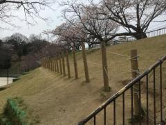 平和中央公園