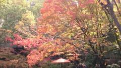 日泰寺庭園
