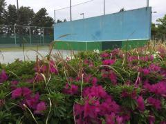 稲永公園テニスコート