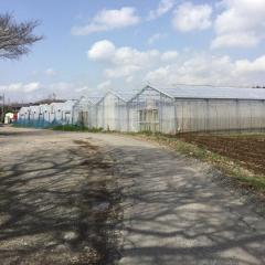 柏井レジャー農園