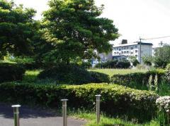 福浜1号緑地