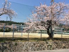 宮野中学校
