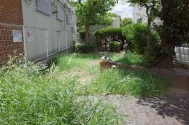堺市第55-10号公共緑地