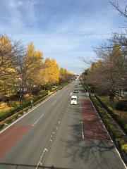 国立大学通り