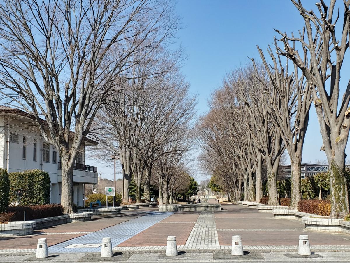 県立つつじが岡公園