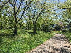 宝神中央公園