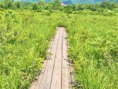 ひるがの湿原植物園