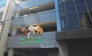 日本・動物21