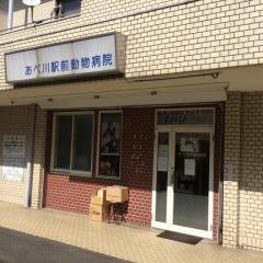 あべ川動物病院