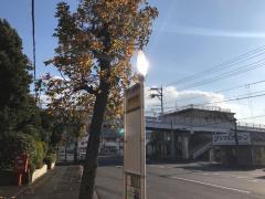 「柳井市役所前」バス停留所