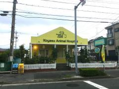 子安動物病院