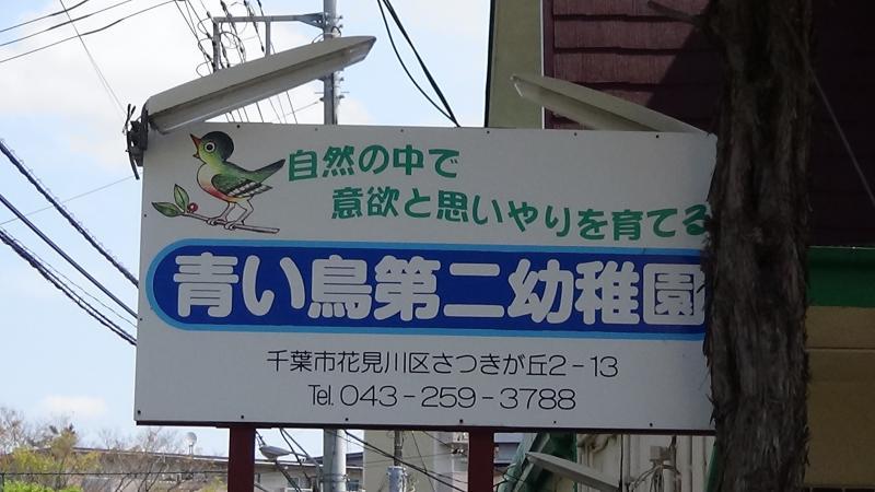 二 第 幼稚園 鳥 青い